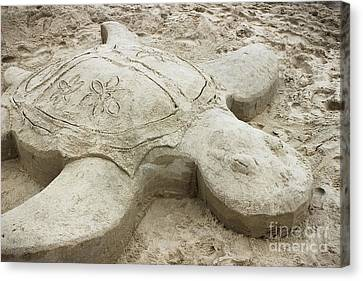 Turtle Time Sand Sculpture Canvas Print by Colleen Kammerer