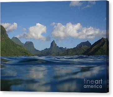 Turtle View Of Paradise Canvas Print by Chad Natti