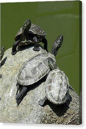 Canvas Print featuring the photograph Turtles At A Temple In Narita, Japan by Breck Bartholomew