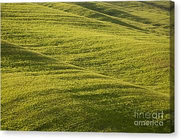 Tuscan Green Canvas Print by Brian Jannsen