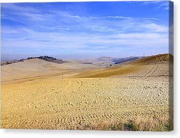 Tuscan Landscape In Siena Canvas Print by Valter Giumetti