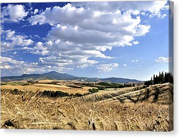 Tuscan Landscape With Cornfield Canvas Print by Juergen Feuerer