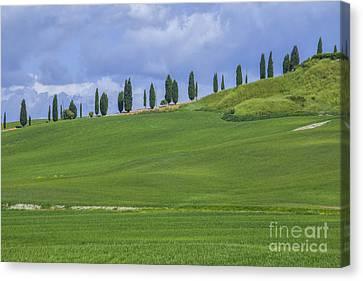 Tuscan Landscape With Cypress Trees Canvas Print by Patricia Hofmeester