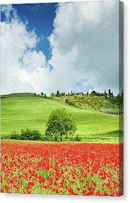 Tuscan Poppies - Vertical Canvas Print by Michael Blanchette