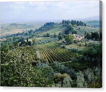 Tuscan Hills Canvas Print - Tuscan Vines by Paul Barlo