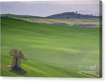 Tuscany Landscape Canvas Print by Ana Mireles