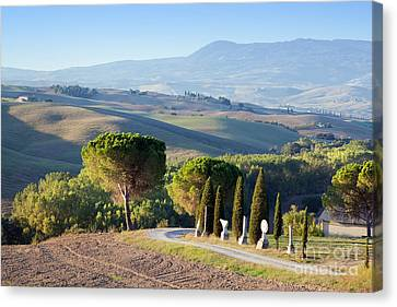 Tuscany Landscape In The Morning. Tuscan Farms, Hills, Cypress Trees Canvas Print by Michal Bednarek