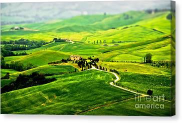 Alberi Canvas Print - Tuscany S Green Scapes by Alessandro Giorgi Art Photography