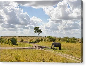 Tusker Scape Canvas Print