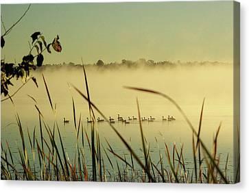 Twenty Geese On Loughborough Lake Canvas Print