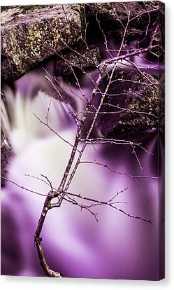 Twig At The Waterfall In Hdr Canvas Print