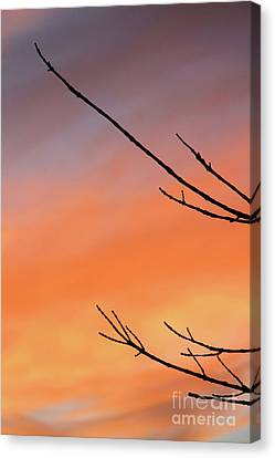 Twigs Against The Sunset Canvas Print