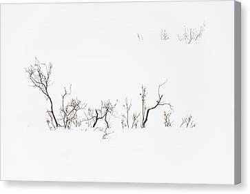 Twigs In Snow Canvas Print