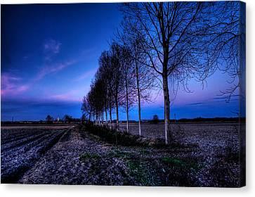 Twilight And Trees Canvas Print