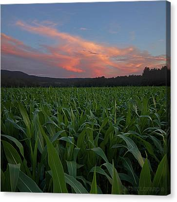 Twilight Cornfield Canvas Print by Jerry LoFaro