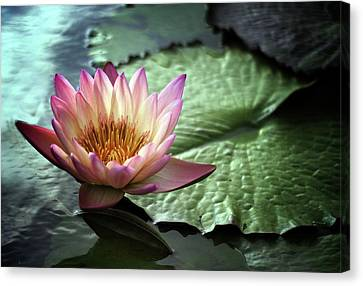 Twilight Lily Canvas Print