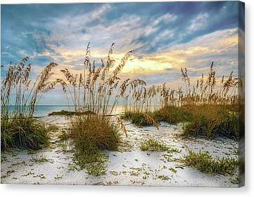 Twilight Sea Oats Canvas Print