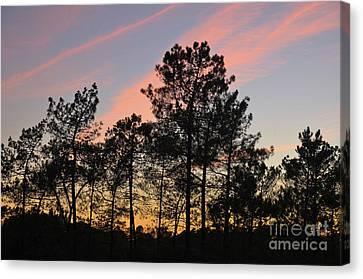 Twilight Tree Silhouettes Canvas Print