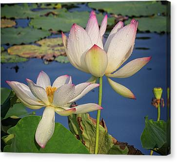 Canvas Print featuring the photograph Twin Blooms by Robert Pilkington