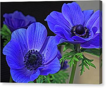 Canvas Print featuring the photograph Twin Blue by Robert Pilkington