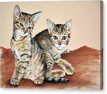 Twin Kittens Canvas Print by Christopher Reid
