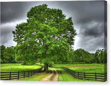 Fence Row Canvas Print - Twin Oaks Drive Southern Living by Reid Callaway