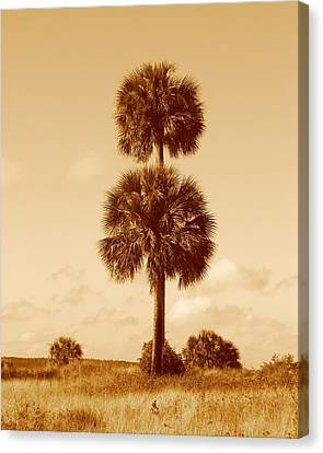 Canvas Print featuring the photograph Twin Palms by Peg Urban