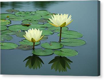 Twin Reflections Canvas Print by Suzanne Gaff