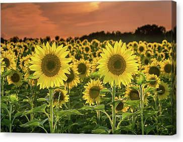 Canvas Print featuring the photograph Peaceful Opposition by Bill Pevlor