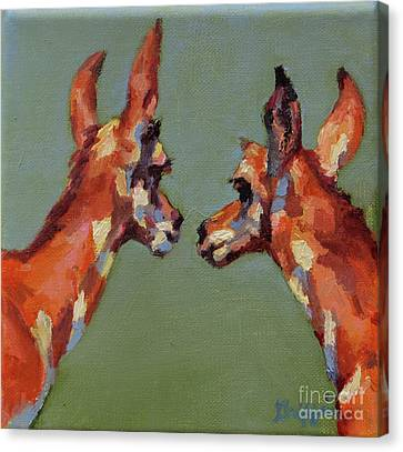 Pronghorn Antelope Canvas Print - Twins by Patricia A Griffin