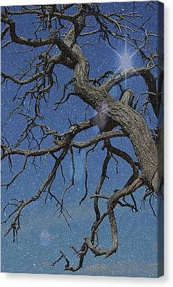 Twisted Branches In The Sky Starry Night Canvas Print