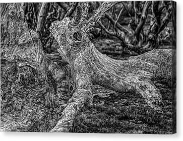 Twisted Canvas Print by Mark Lucey