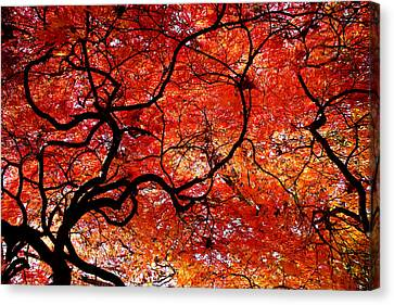 Gnarly Canvas Print - Twisted Red by Colleen Kammerer