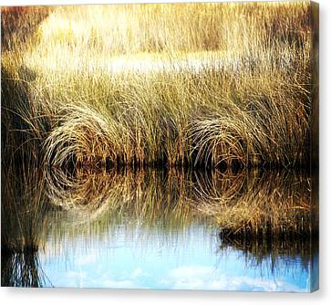 Twisted Reeds Canvas Print