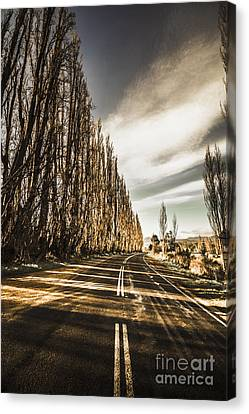 Twisted Roads And Dead Trees Canvas Print by Jorgo Photography - Wall Art Gallery
