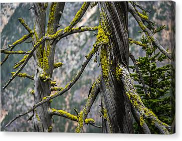 Twisted Sisters Washington Pass Lookout Canvas Print