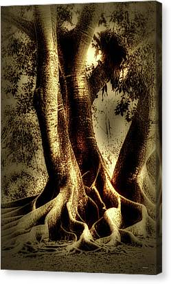Canvas Print featuring the photograph Twisted Trees by Tom Prendergast