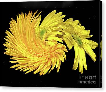 Canvas Print featuring the digital art Twisted Yellow Daisies by Merton Allen