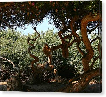 Twisty Tree Canvas Print