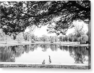 Canvas Print featuring the photograph Two At The Pond by Karol Livote
