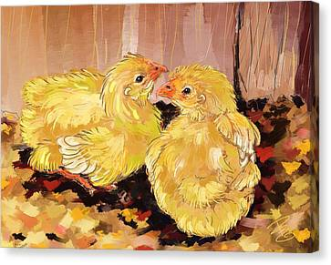 Two Baby Cornish Chicks Canvas Print