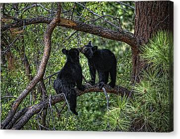 Two Bear Cubs Kissing Up A Tree Canvas Print by Paul W Sharpe Aka Wizard of Wonders