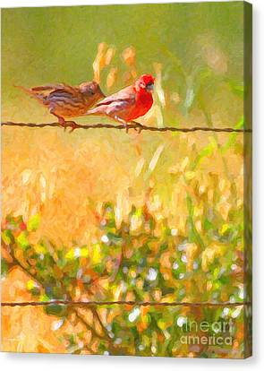 Finch Canvas Print - Two Birds On A Wire by Wingsdomain Art and Photography