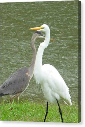 Canvas Print featuring the photograph Two Birds Passing By The Pond by Jeanne Kay Juhos