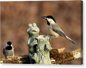 Two Black-capped Chickadees And Frog Canvas Print