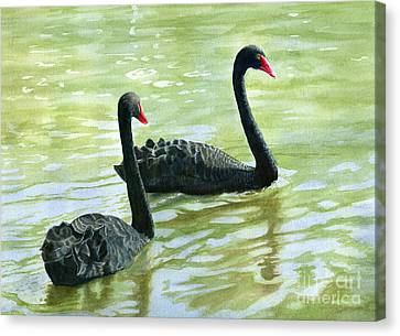 Two Black Swans Canvas Print by Sharon Freeman