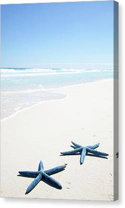 Two Blue Starfish On Tropical Beach Canvas Print by Lulu