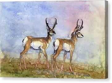 Pronghorn Antelope Canvas Print - Two Boys Pronghorns by Robert Spannring