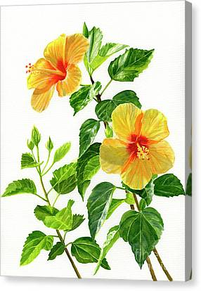 Hibiscus Canvas Print - Two Bright Yellow Hibiscus Blossoms by Sharon Freeman