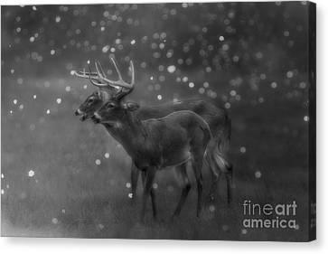 Two Bucks Canvas Print by Geraldine DeBoer